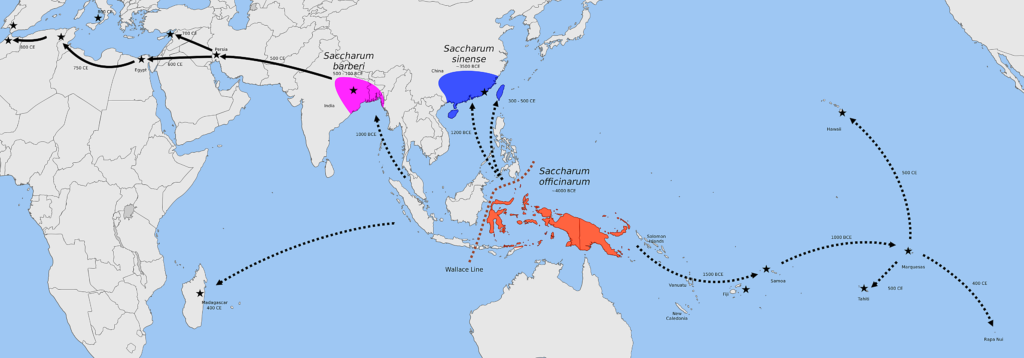 Map showing the spread of sugar cane.